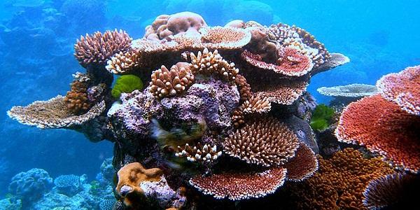 【グレートバリアリーフ】宇宙からも見える世界最大のサンゴ礁