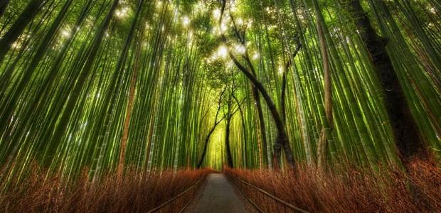 【竹林の道】心が清められそうな嵯峨野の美しい竹林